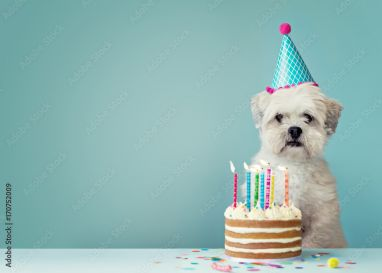 Prime Foto Op Canvas Dog With Birthday Cake Foto4Art Personalised Birthday Cards Paralily Jamesorg