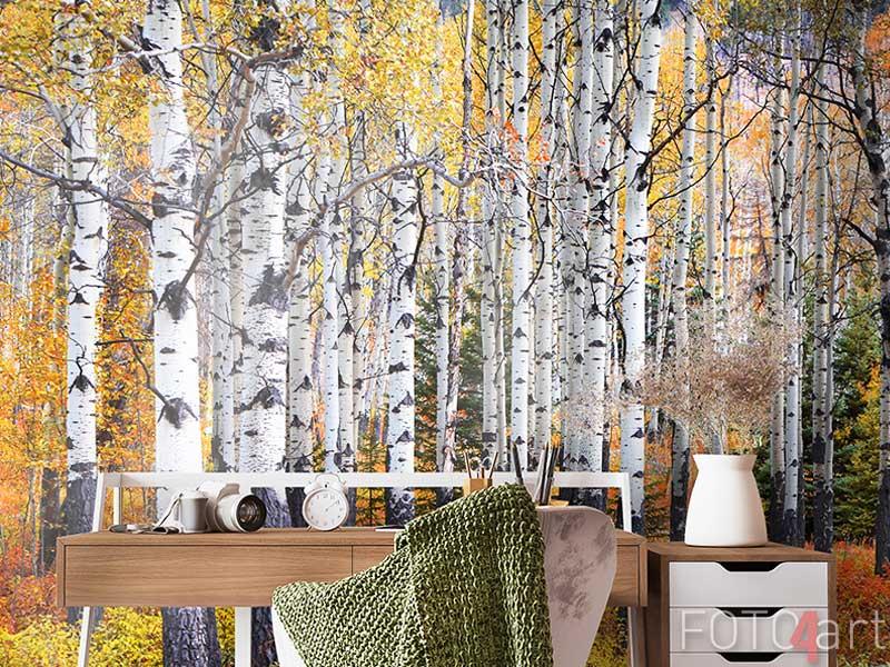 Fotobehang - Many Aspen trees in a