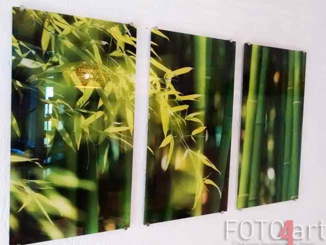 Foto op plexiglas bamboe
