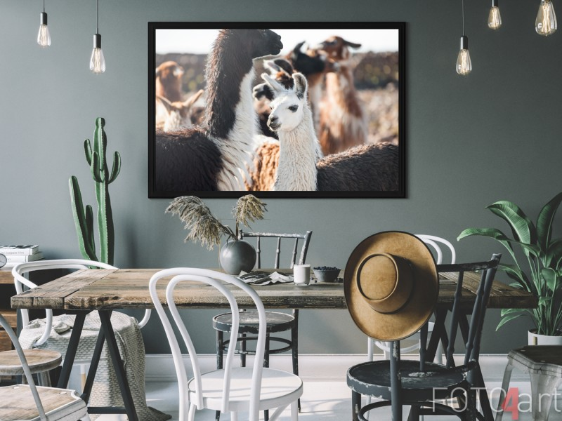 Eetkamer met Foto Lama op Poster