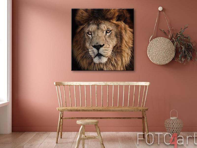 Foto op canvas leeuw