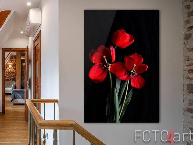 Foto op plexiglas rode tulpen
