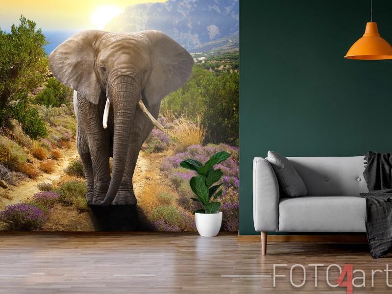 Olifant op fotobehang