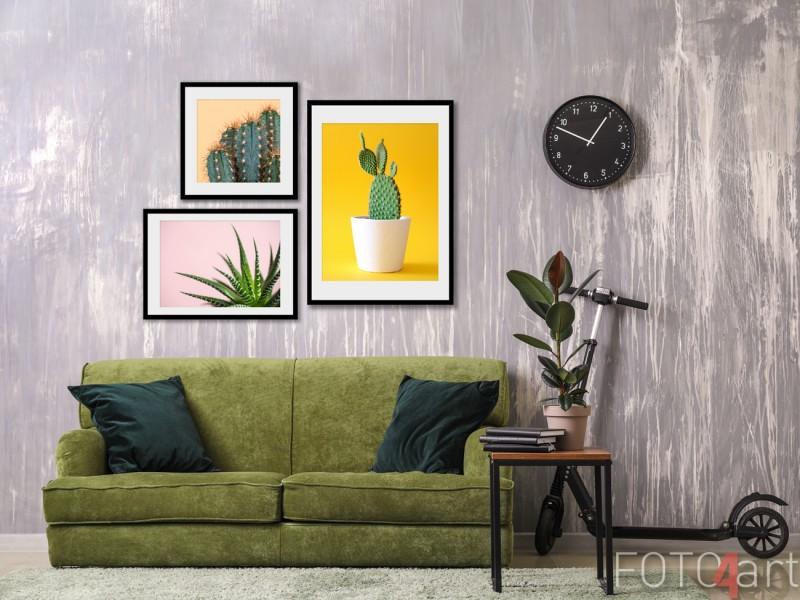 Fotowand met Posters Cactussen