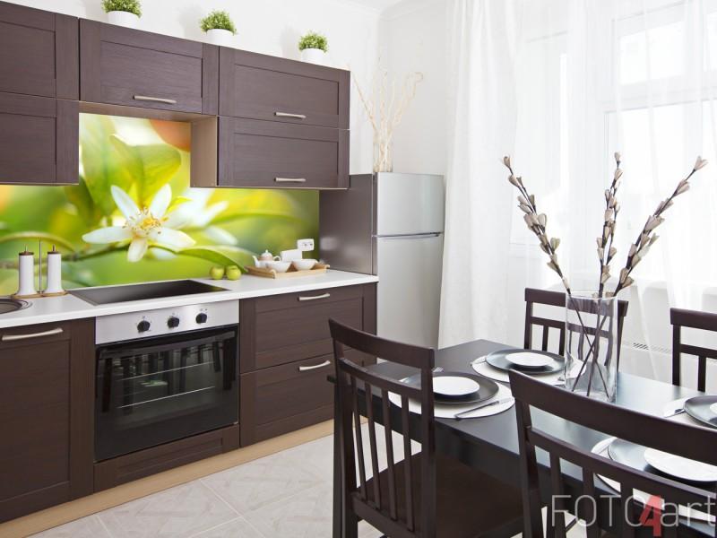 Glazen Keuken Achterwand met Foto Sinaasappelboom
