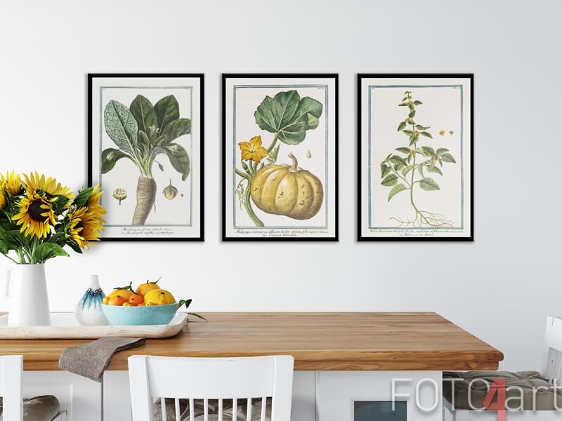 Ingelijste posters met botanische illust