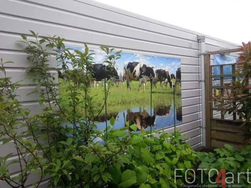 Foto op Tuinposter Koeien