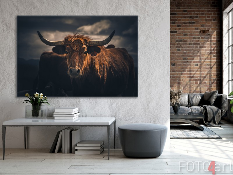 Woonkamer met Foto Schotse Hooglander op Canvas